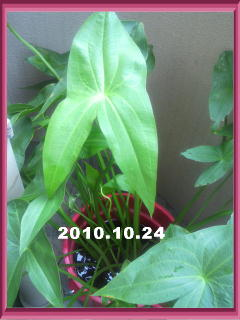 20101024_4